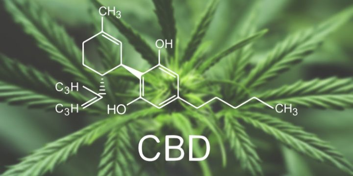 CBD Round-Up: 9 Things You Should Know About This Plant Remedy