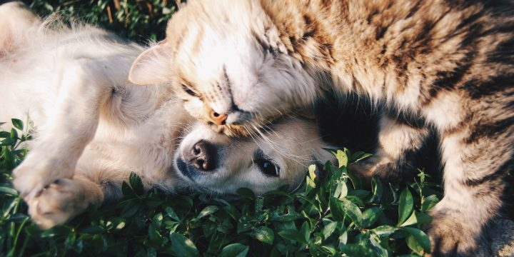 CBD for Pets: How to Safely Use Cannabidiol for Dogs and Cats